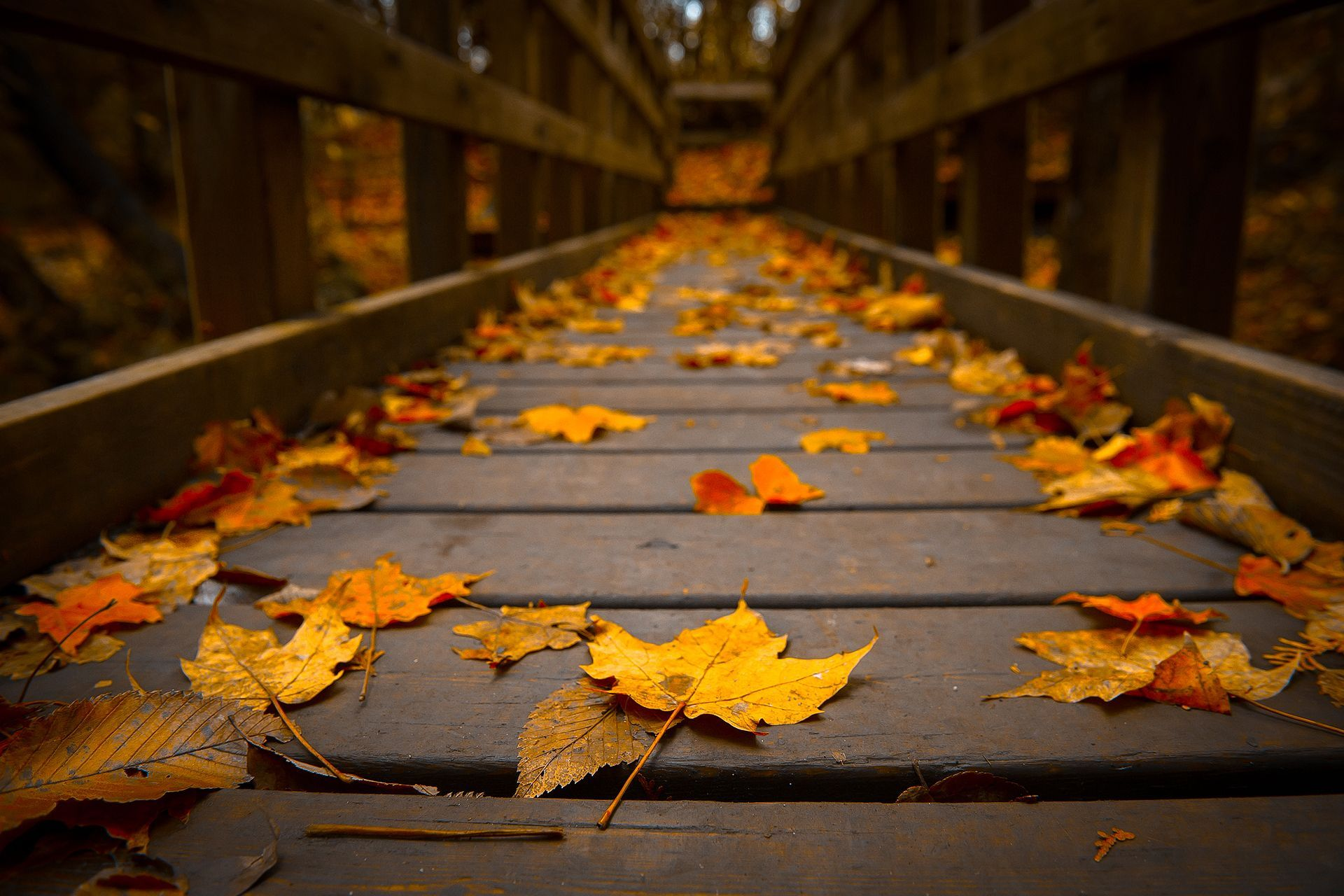 HD Autumn Leaves Wallpaper | Download Free - 59728 | Backgrounds ...