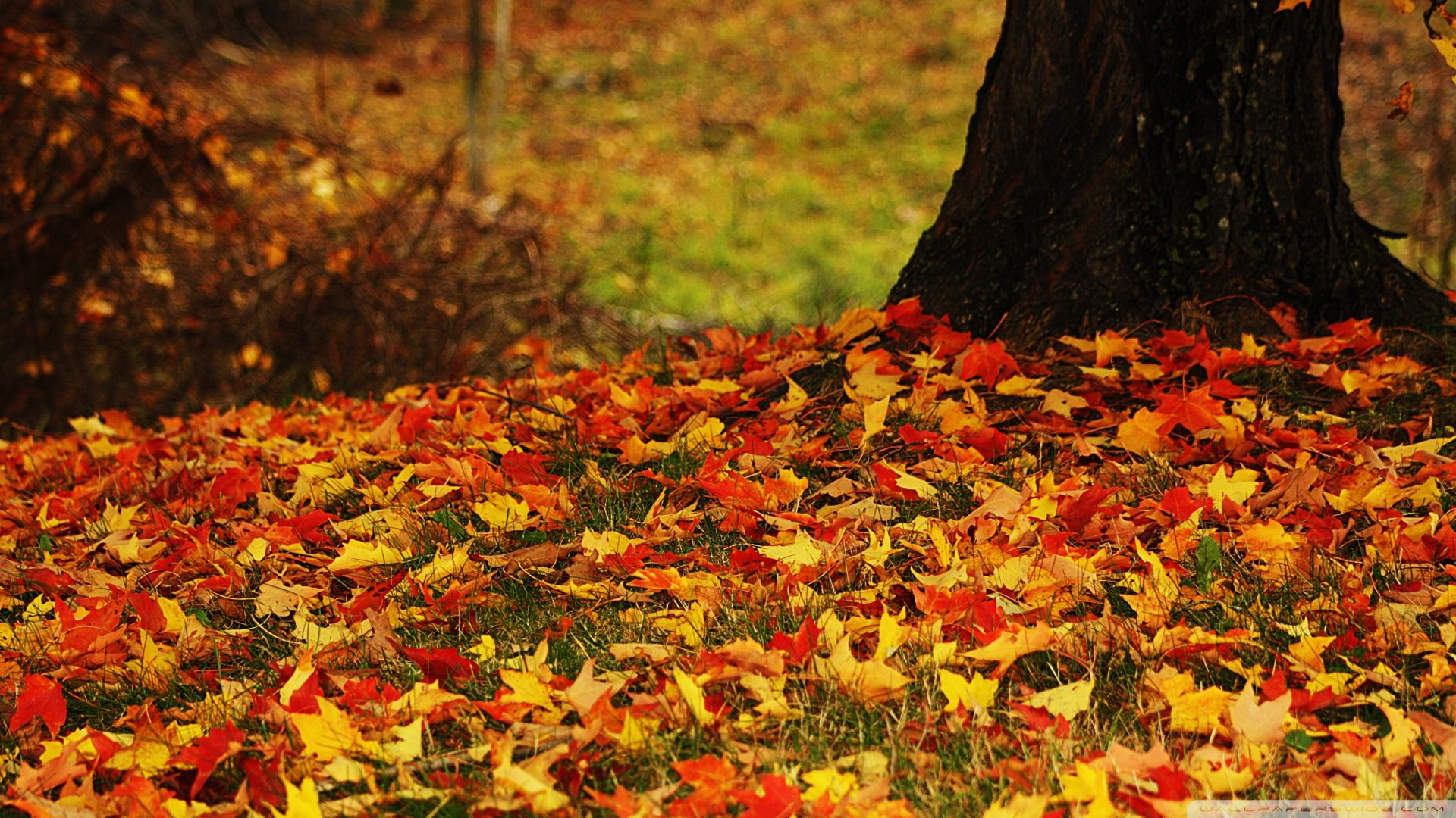 Red And Yellow Autumn Leaves ❤ 4K HD Desktop Wallpaper for 4K Ultra ...