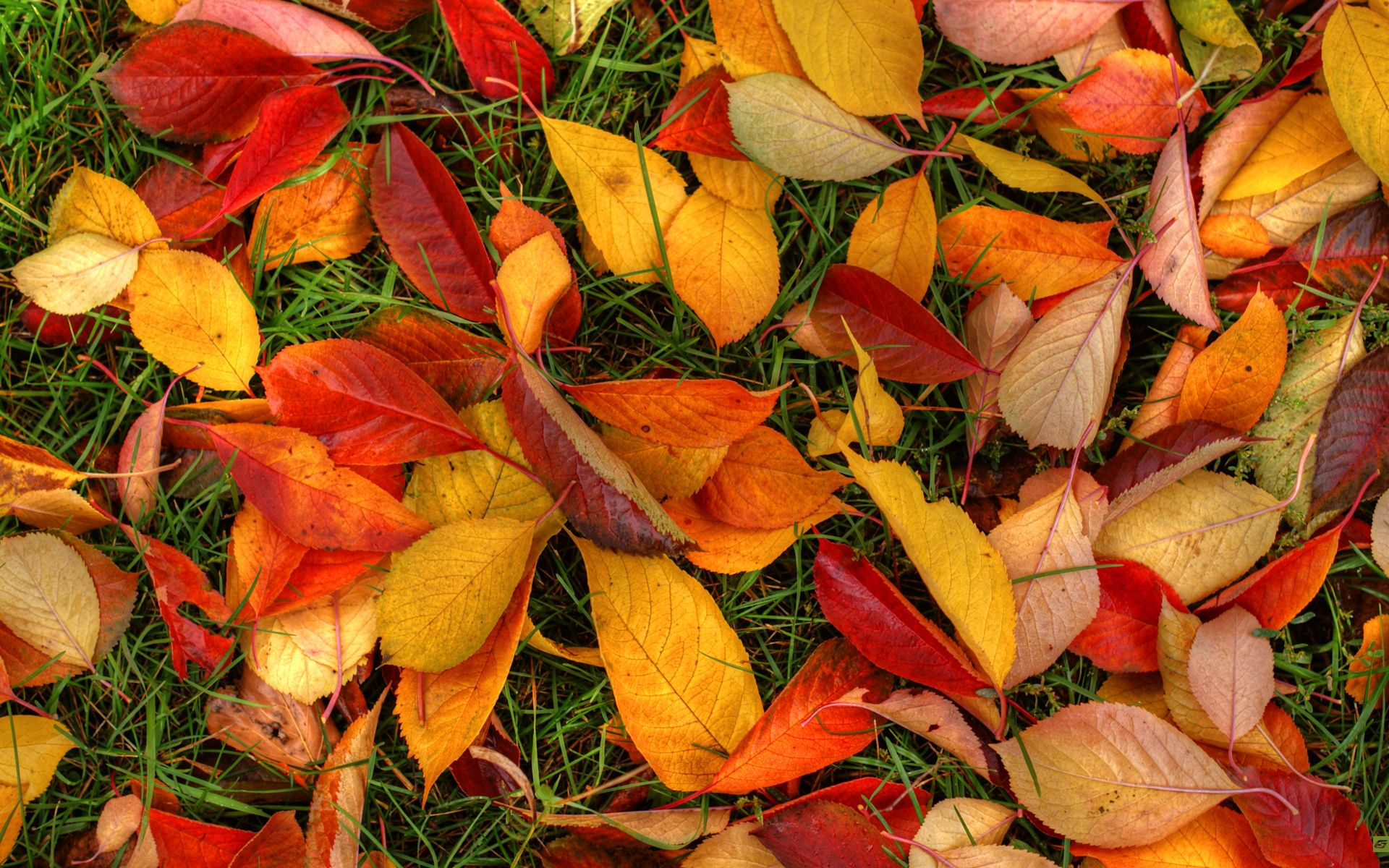 Autumn Leaves Wallpapers | HD Wallpapers | ID #12798