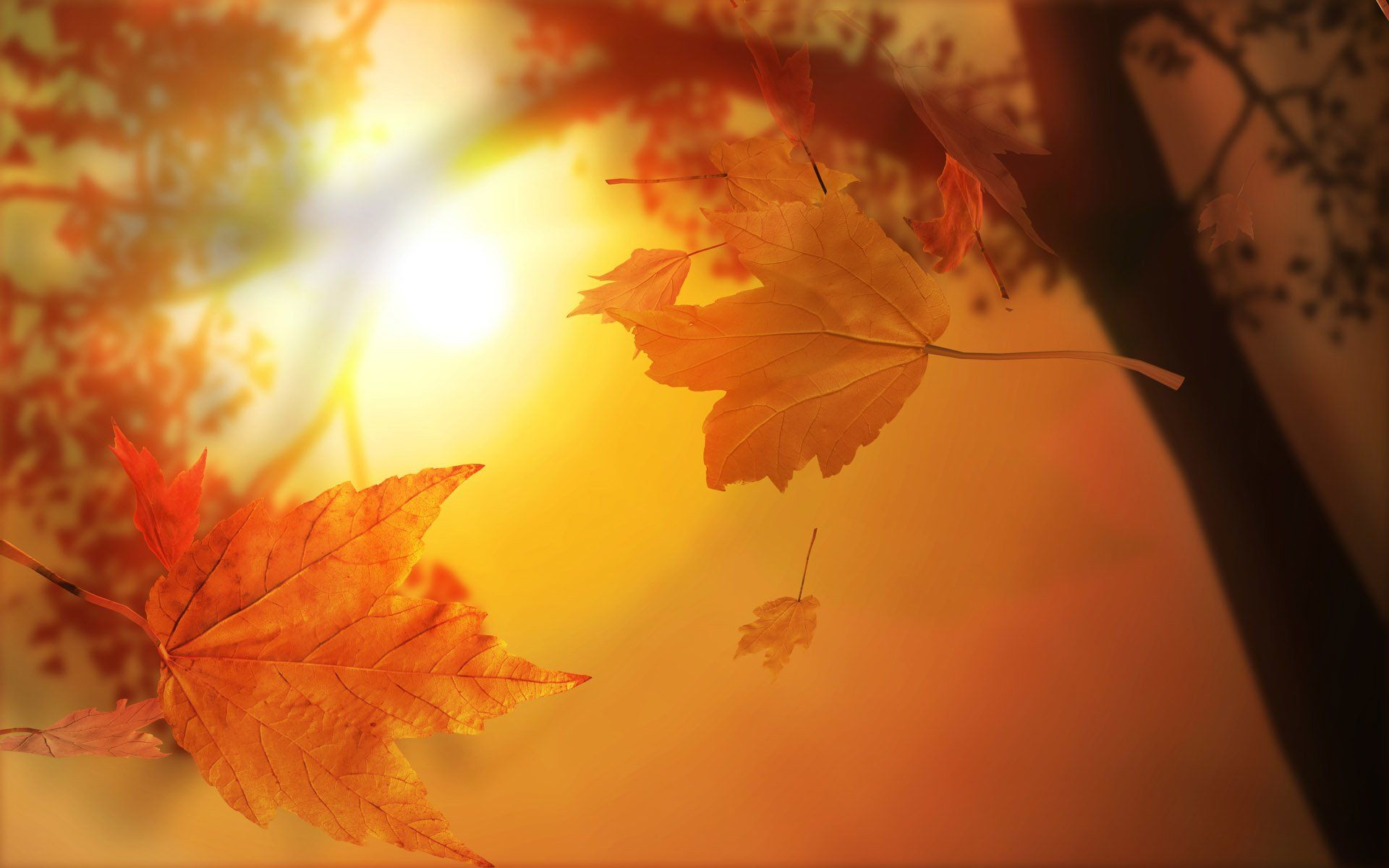 939 Fall HD Wallpapers | Background Images - Wallpaper Abyss
