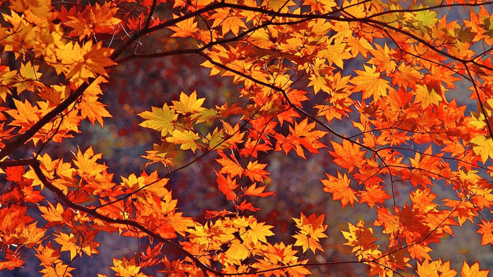 Fall Leaves desktop background ·① Download free stunning wallpapers ...