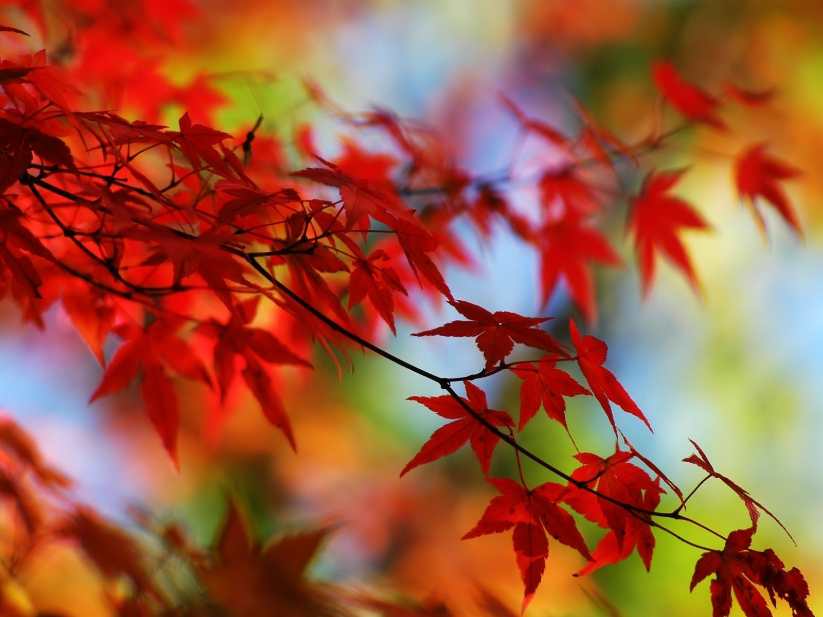 Autumn images Autumn leaves HD wallpaper and background photos ...
