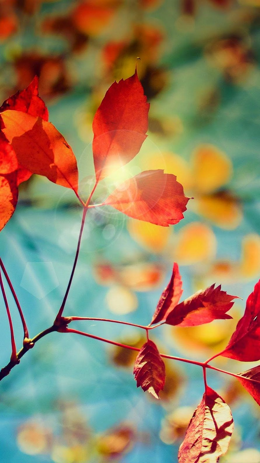 Autumn Leaves HD Wallpaper Android Phone