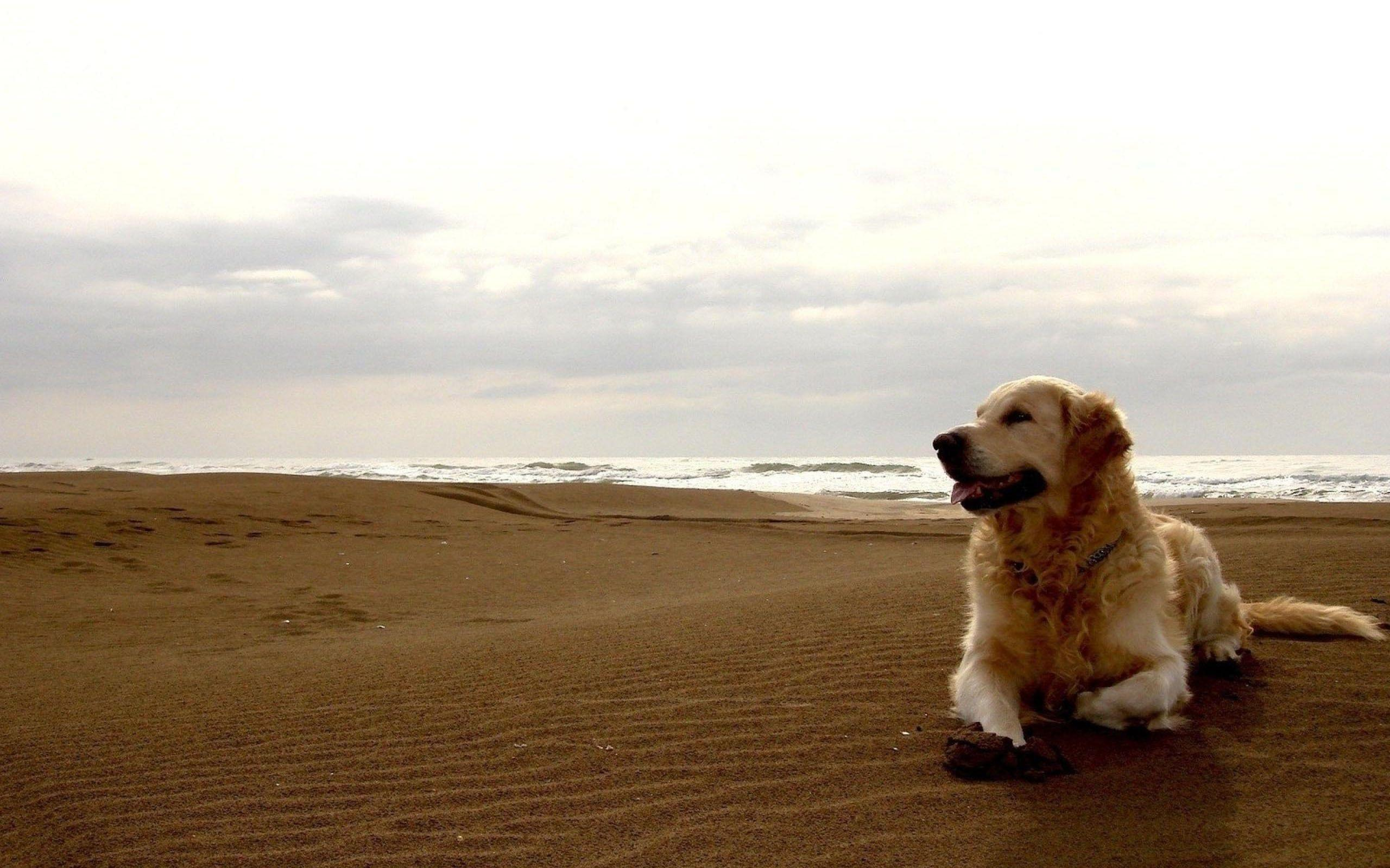Dogs Hd Wallpapers