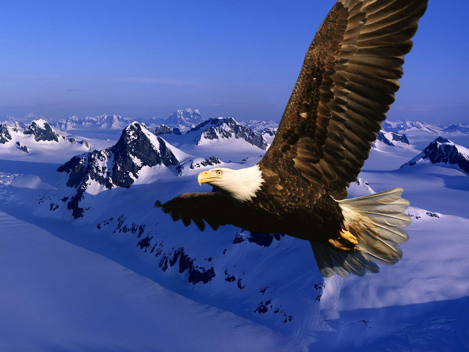 Bird backgrounds with eagles