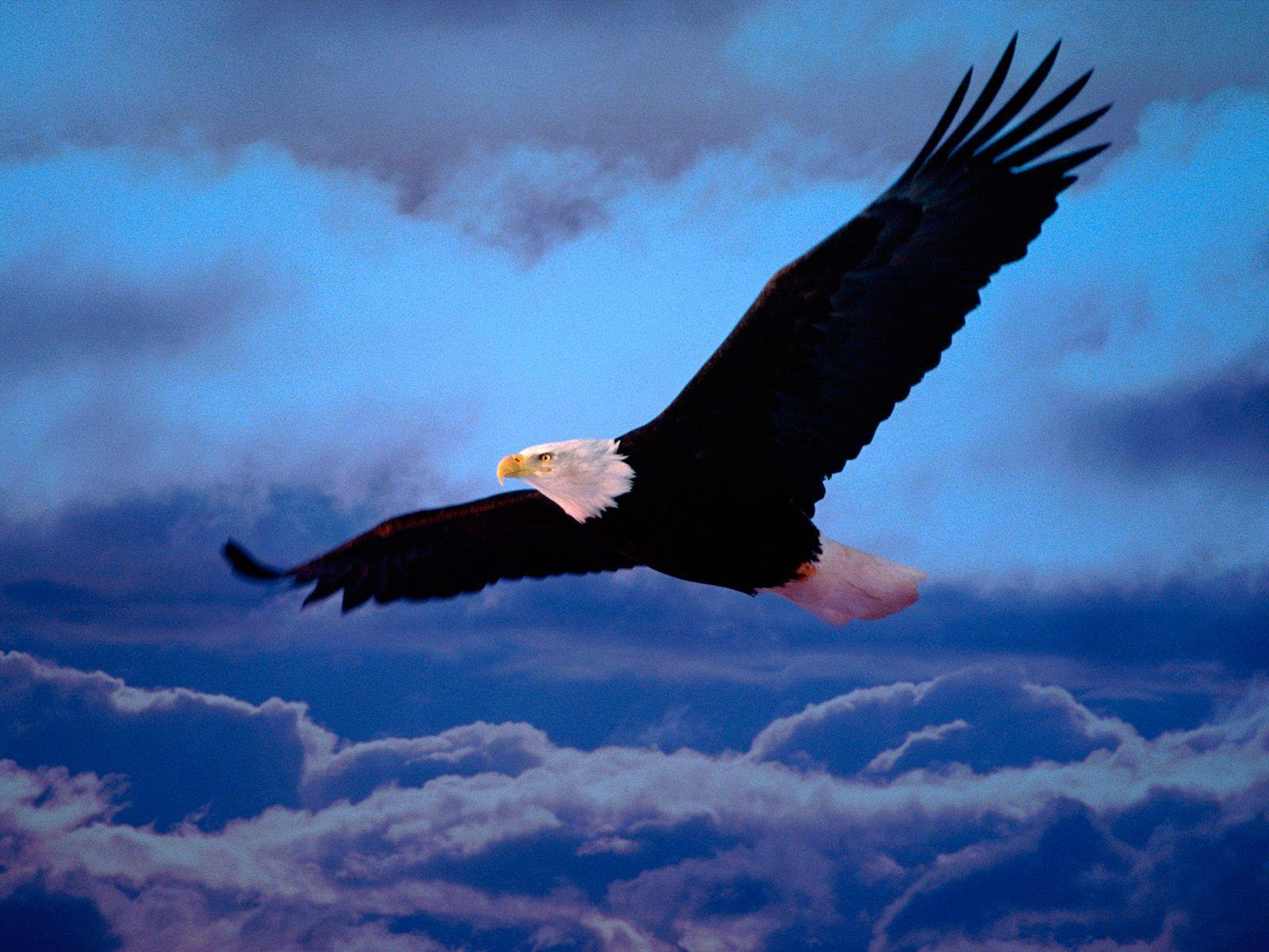 Animals For > Eagles Logo Wallpapers Hd
