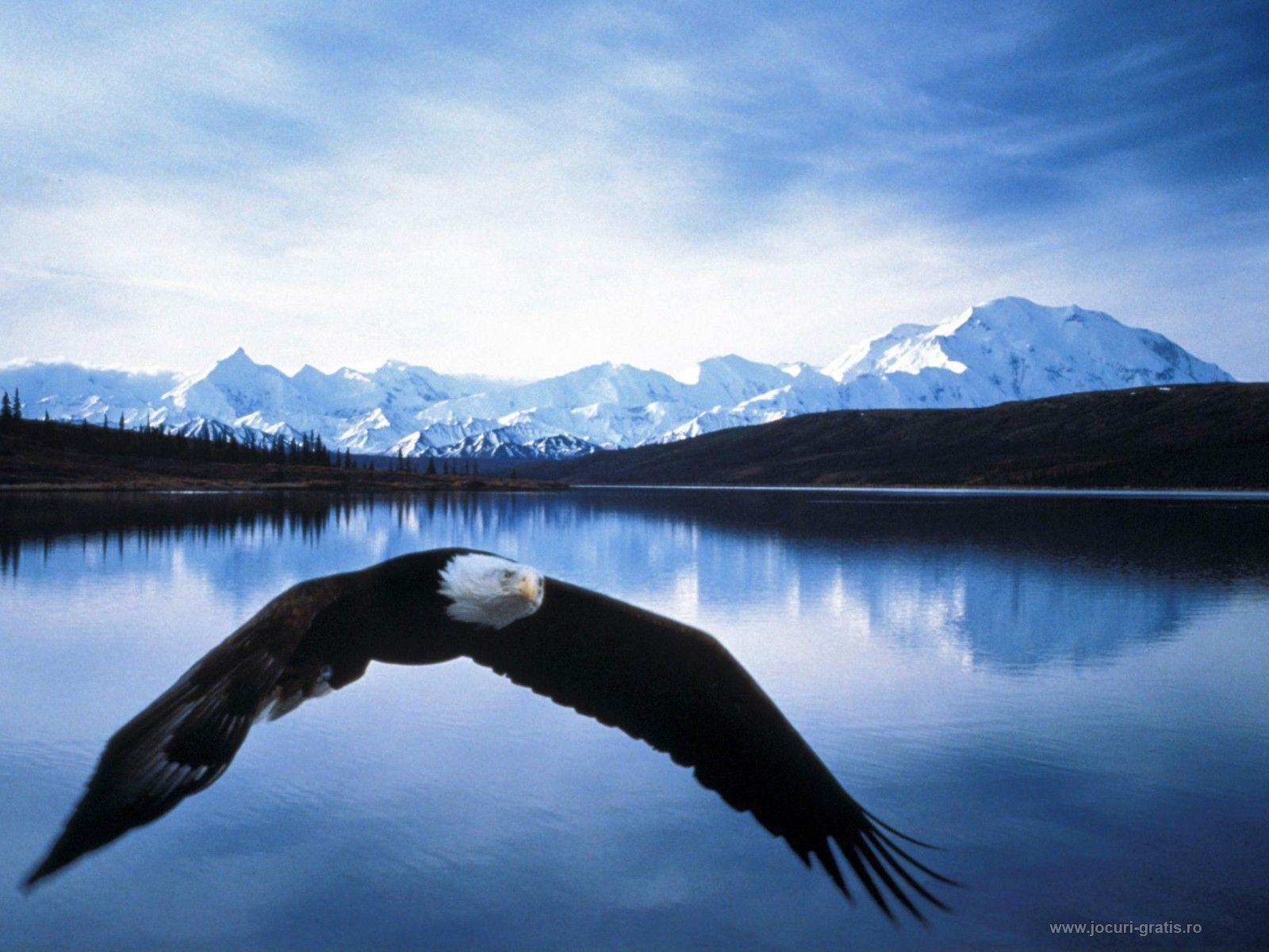 Eagle Wallpapers Free Download Group