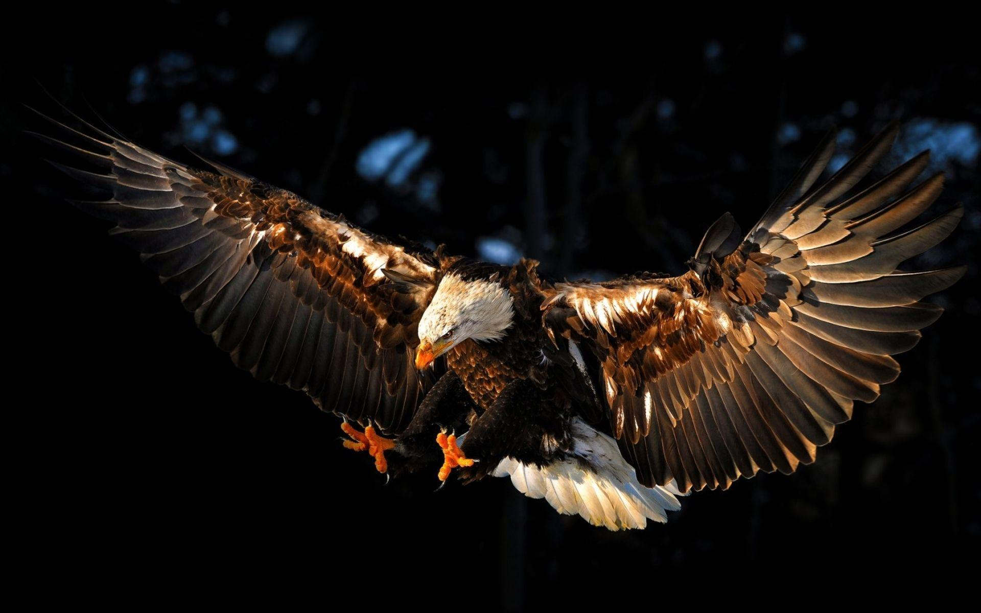 Eagle Desktop Wallpapers Amazing Collection