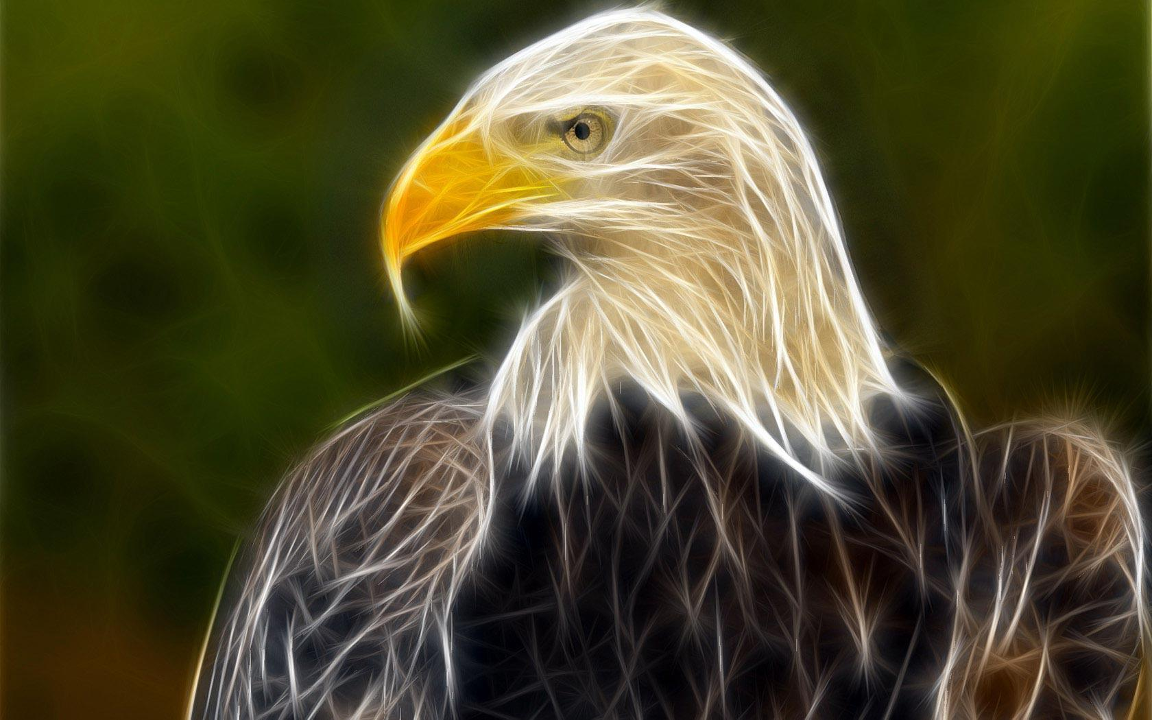 Eagle wallpapers