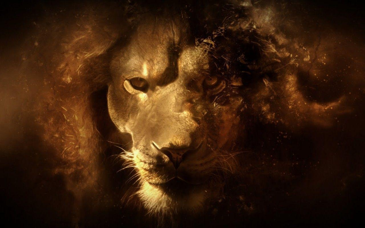 lion wallpapers | lion wallpapers
