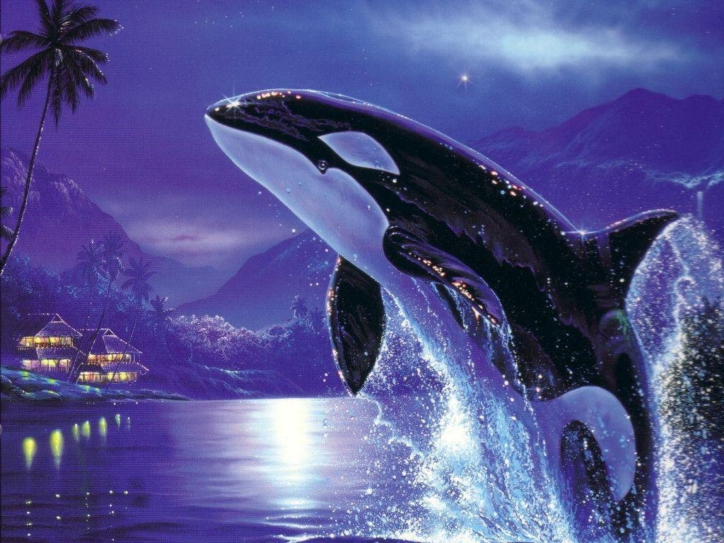 Jumping Orca Wallpapers High Res Pics 3435 Wallpapers
