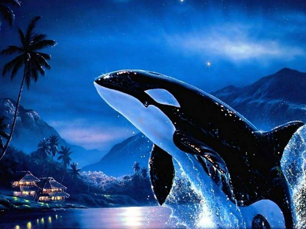 Image For > Orca Wallpapers
