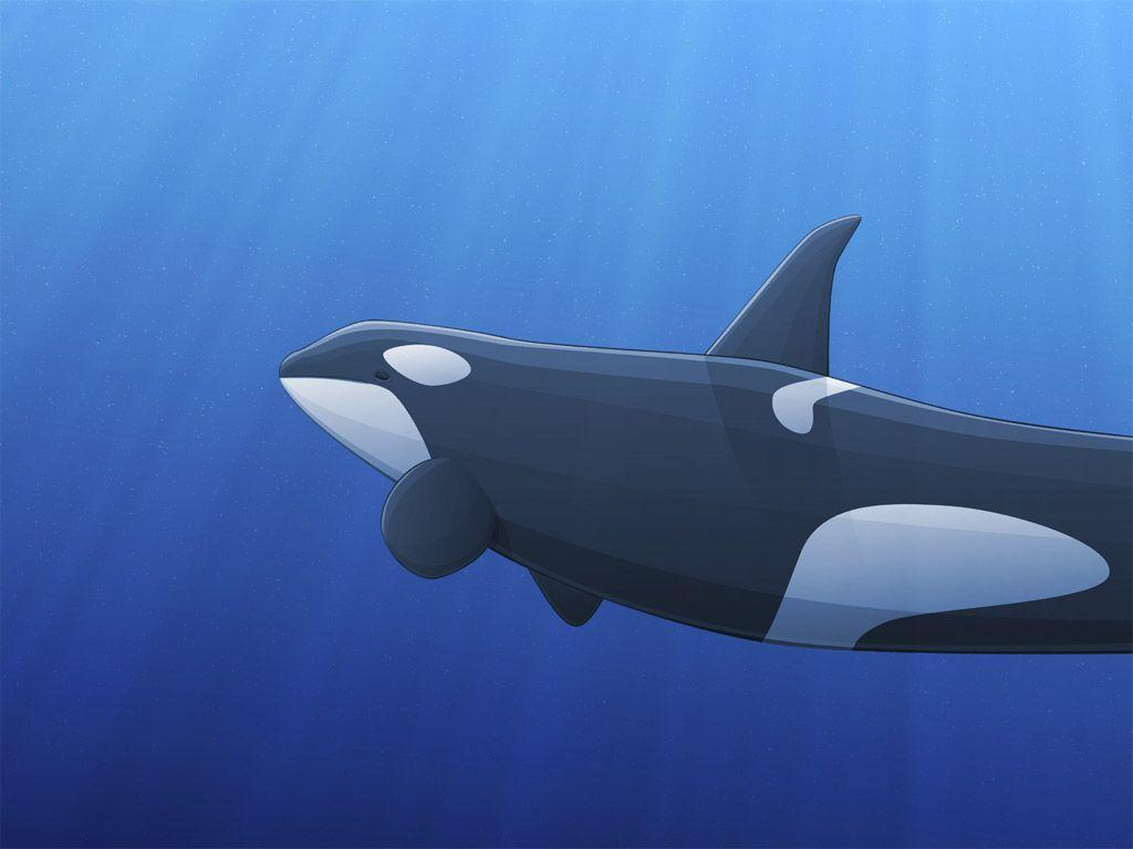 Wallpapers Collections: orca