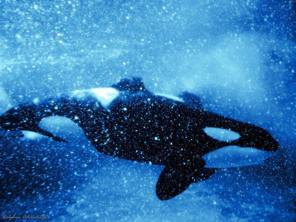 orca wallpapers by annlo13 wallpapers
