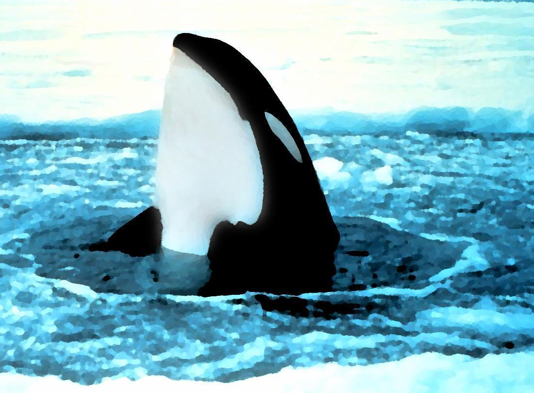 orca popping out of ice painting wallpapers