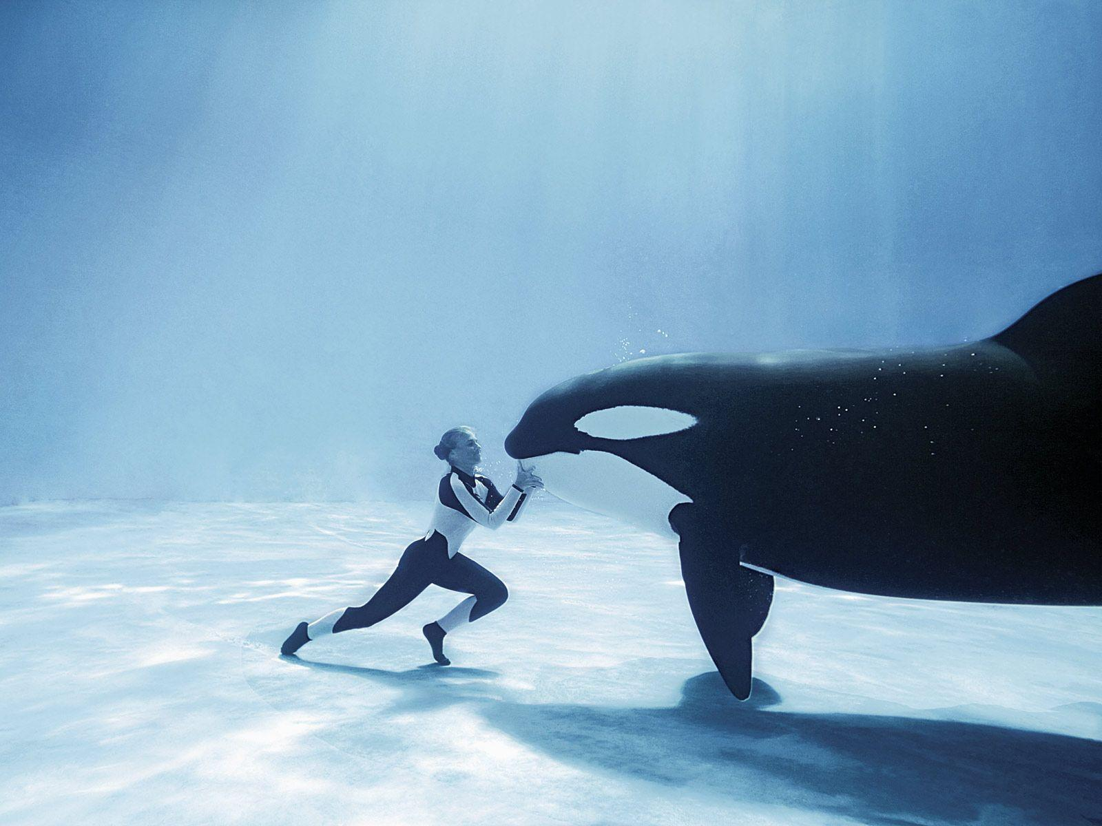 My slight orca whale obsession...