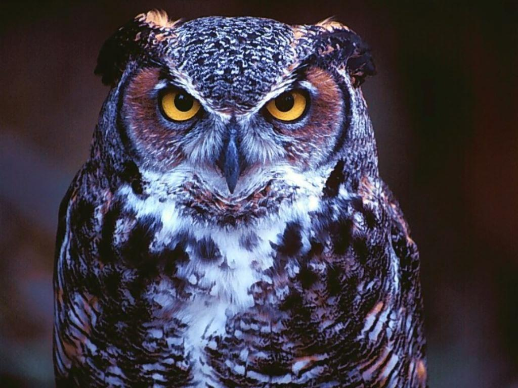 A selection of 10 Images of Owl in HD quality
