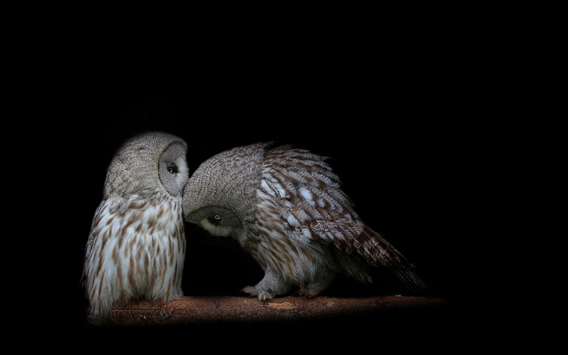 612 Owl Wallpapers | Owl Backgrounds Page 5