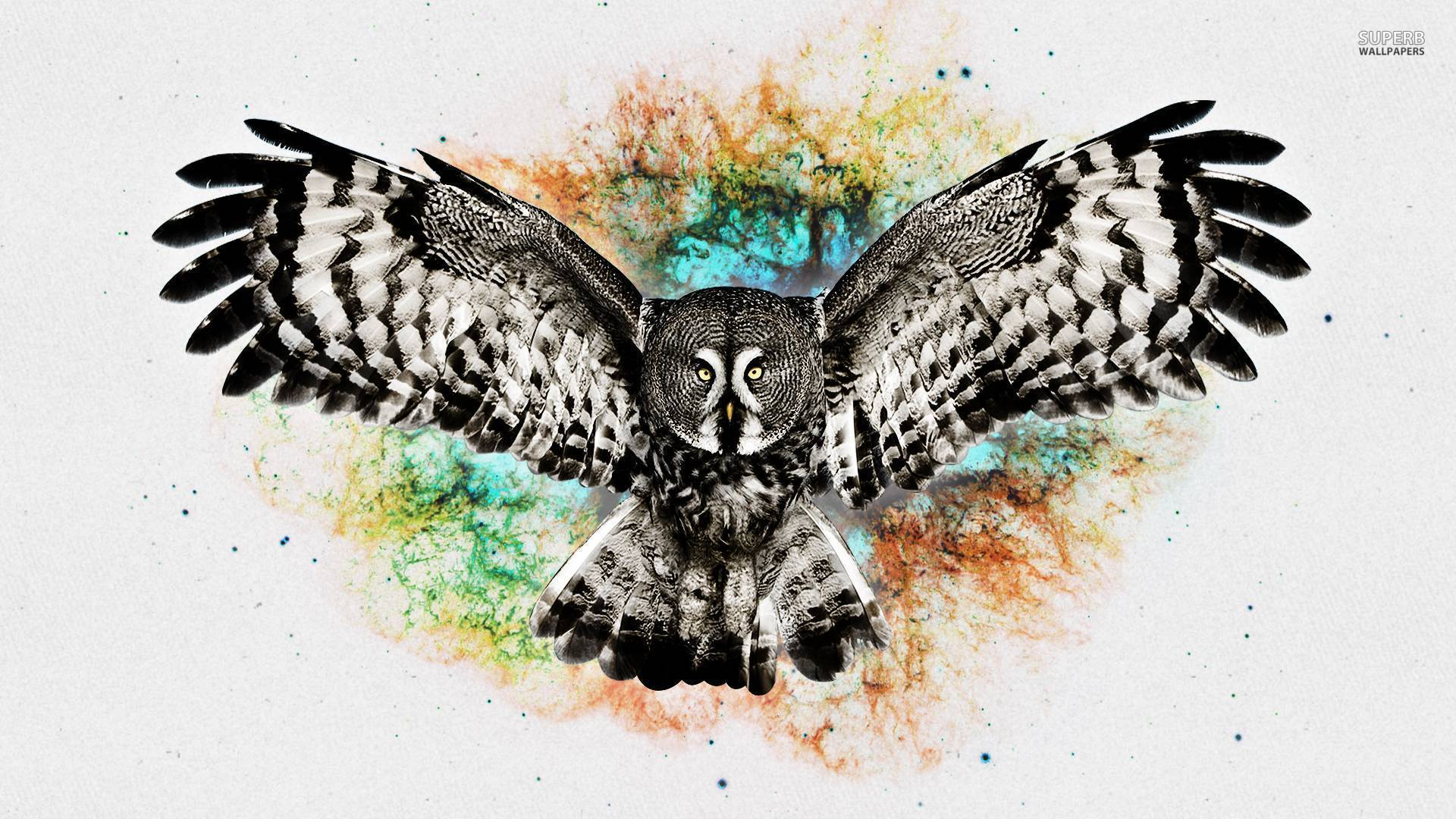 Owl wallpaper - Digital Art wallpapers - #