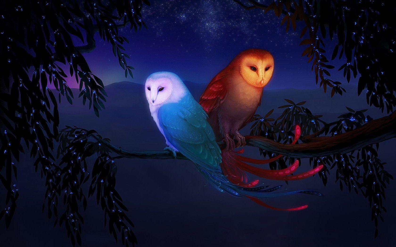 13 Owl Wallpapers | Owl Backgrounds