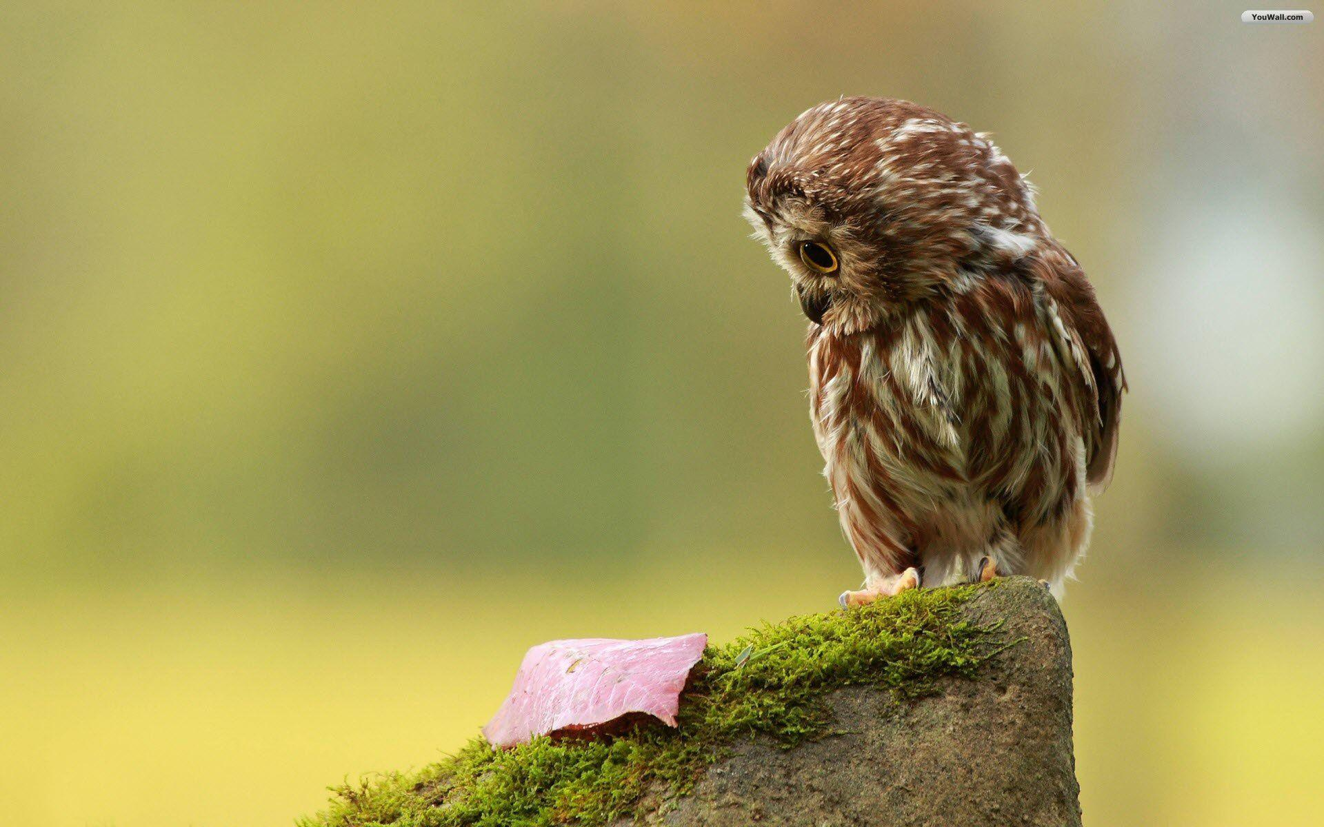 Wallpapers For > Cute Baby Owl Wallpaper