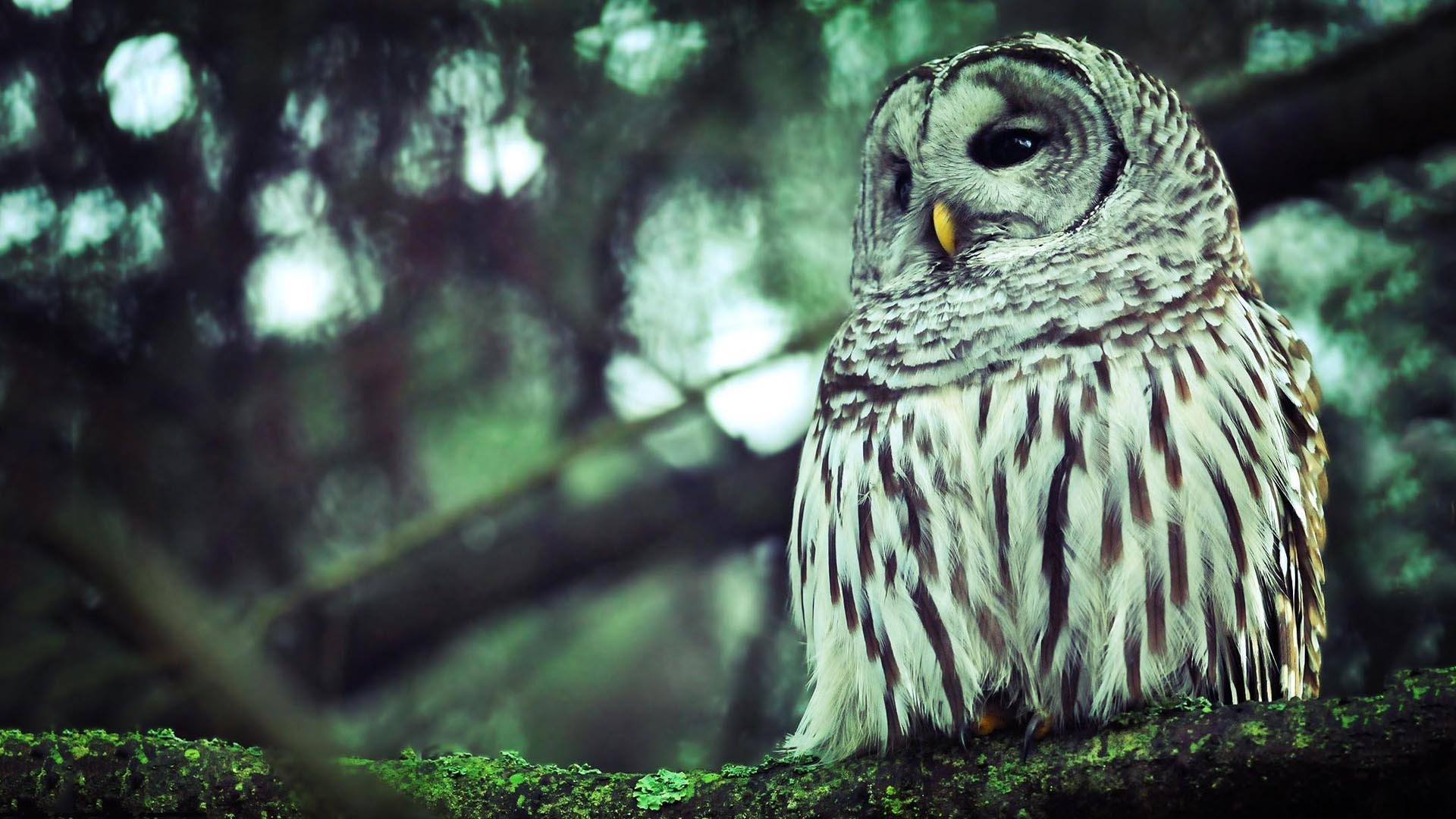 Owl Wallpapers - HD Wallpapers Inn