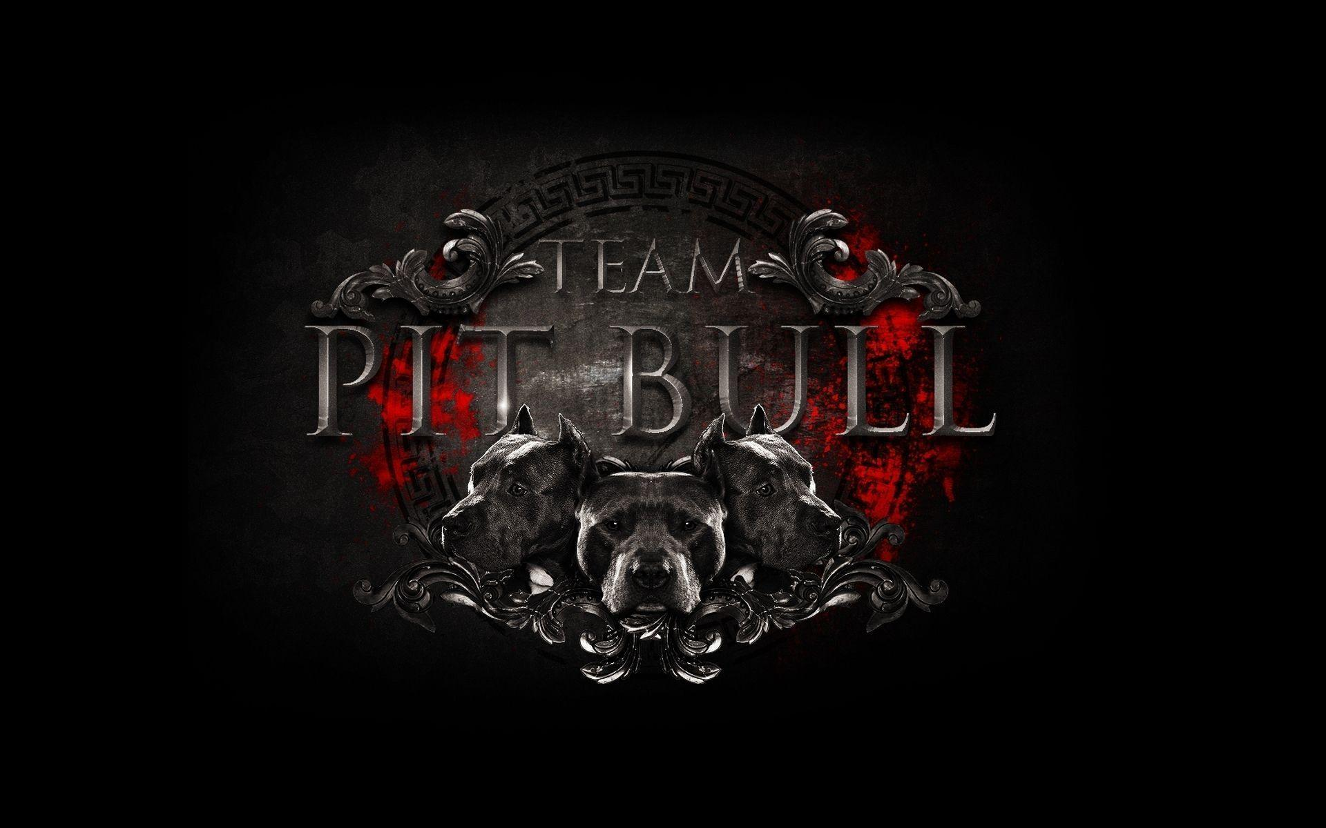 Image For > Pit Bulls Wallpapers