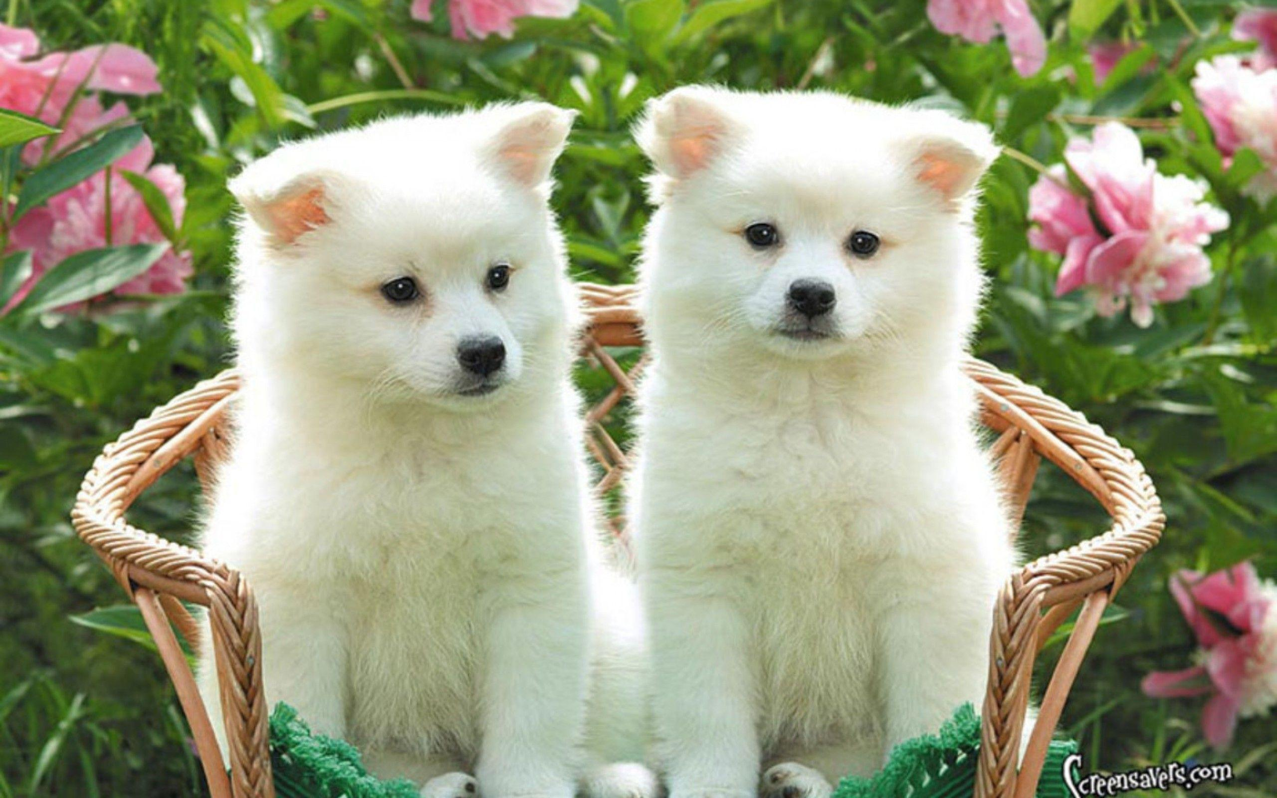 Wallpapers For > Hd Wallpapers Of Puppies
