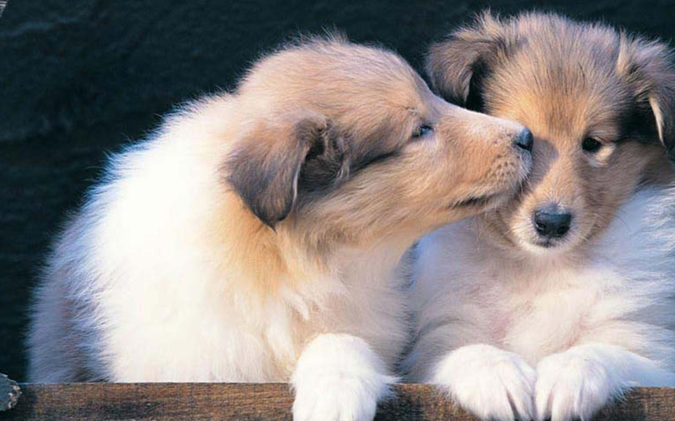 Wallpapers For > Puppy Wallpaper Widescreen Hd