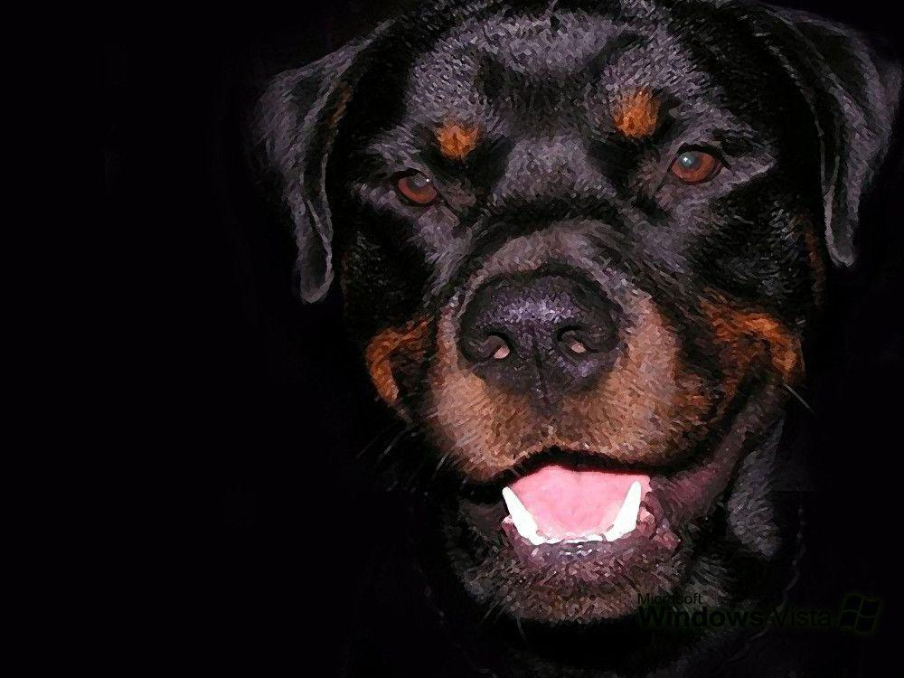 Rottweiler Wallpaper Images & Pictures - Becuo