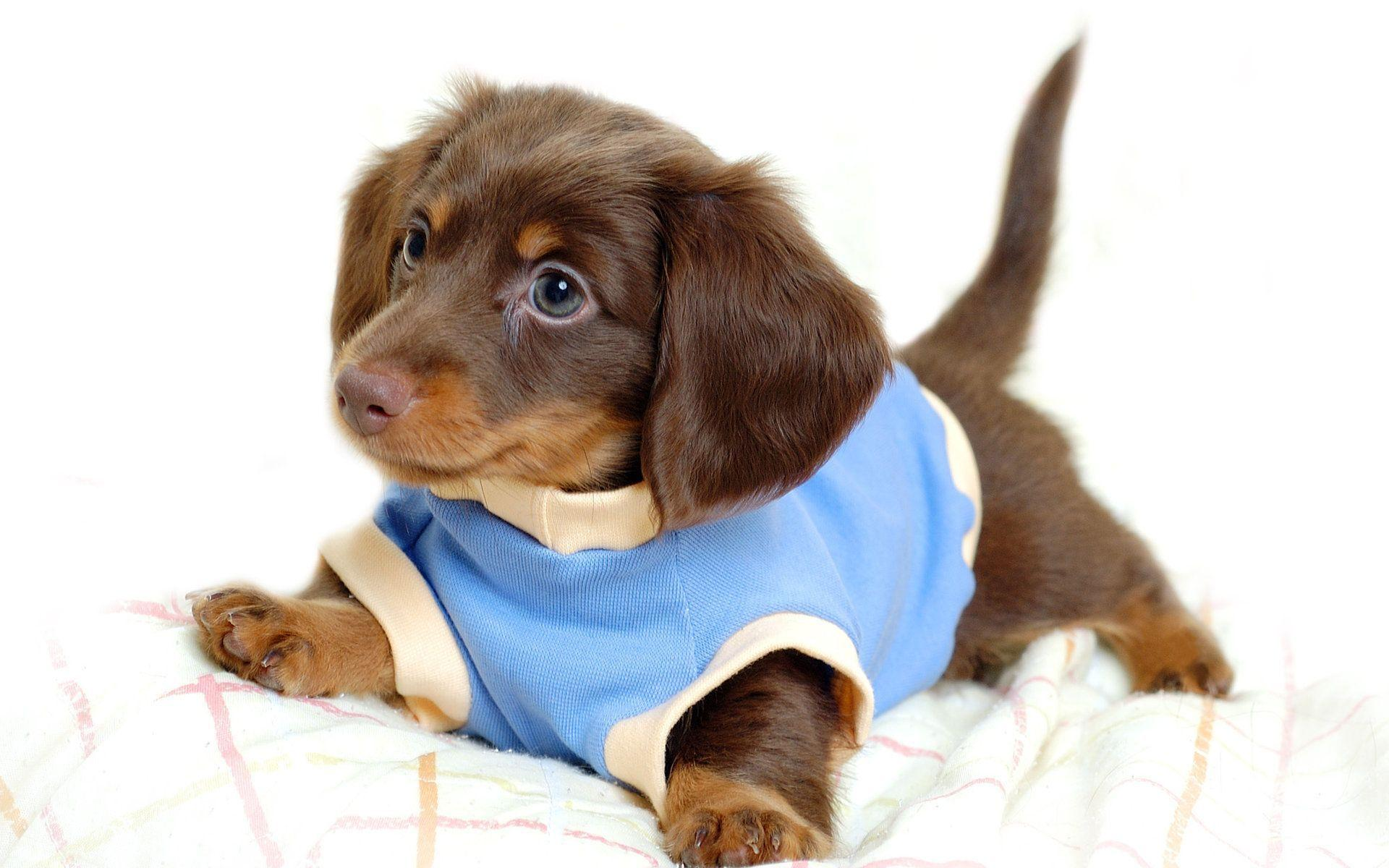 puppies wallpaper for desktop   Funny pictures photos,funny jokes ...