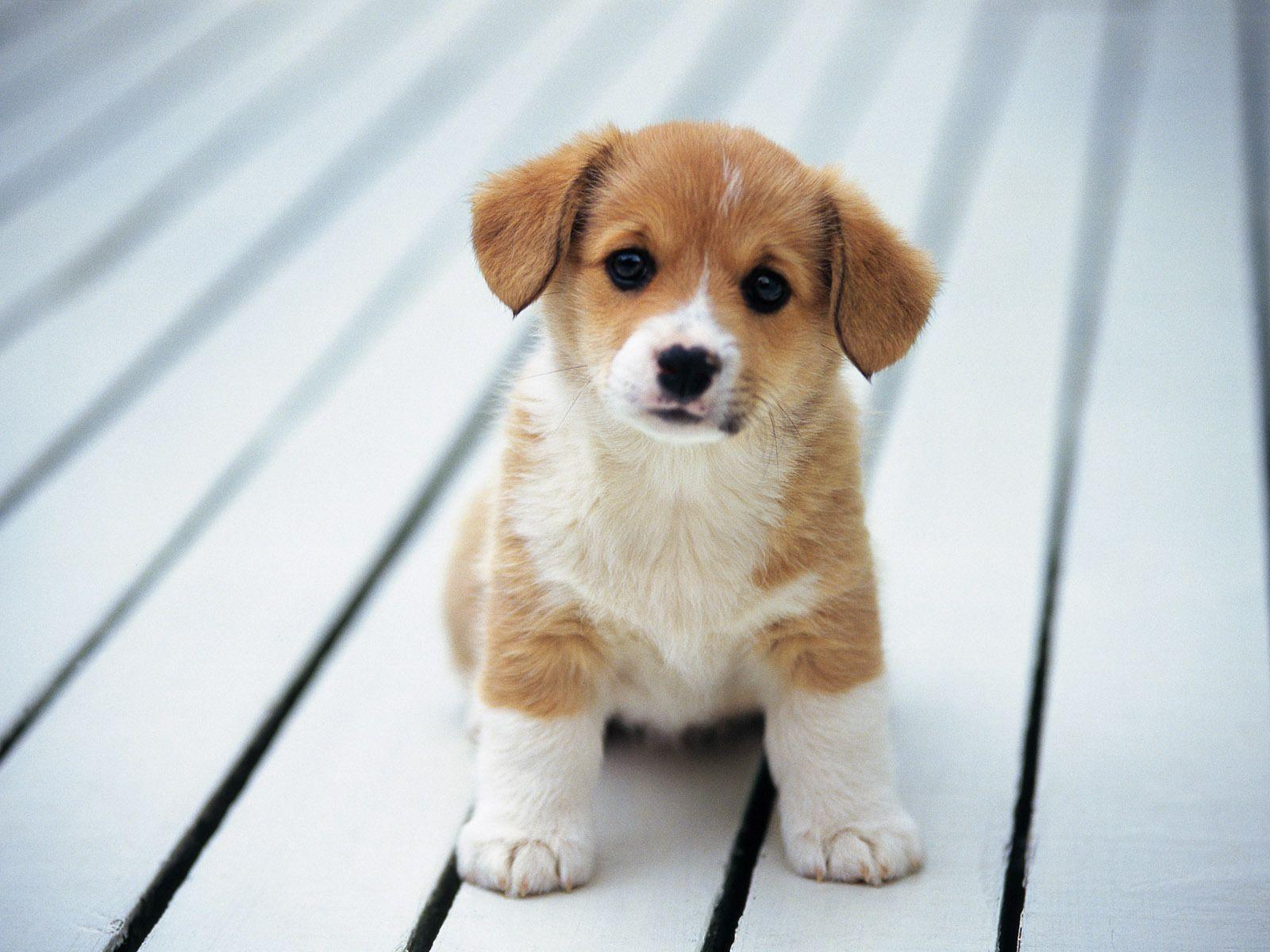 Wallpapers For > Wallpaper Of Puppies