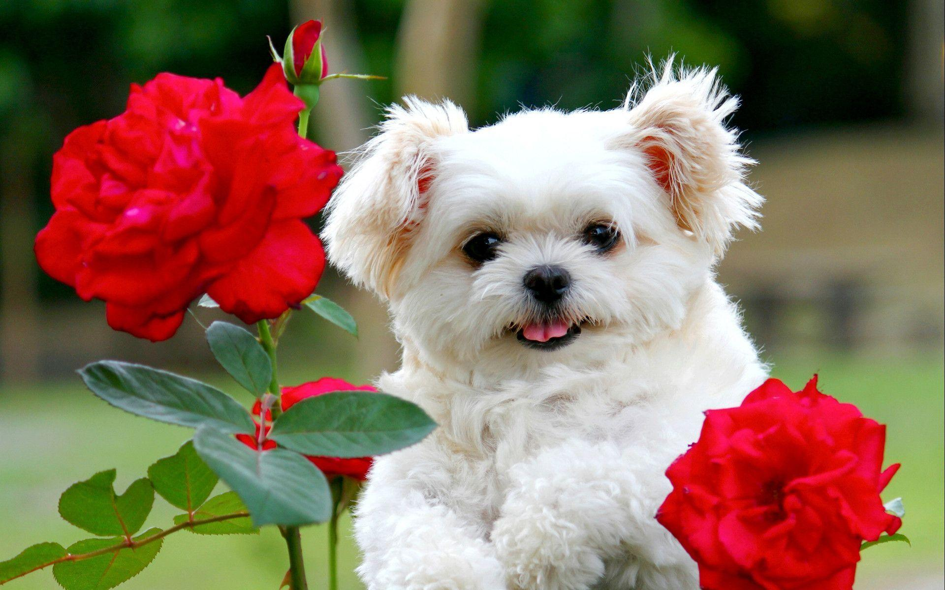 Images For > Cute Puppies Wallpaper Backgrounds