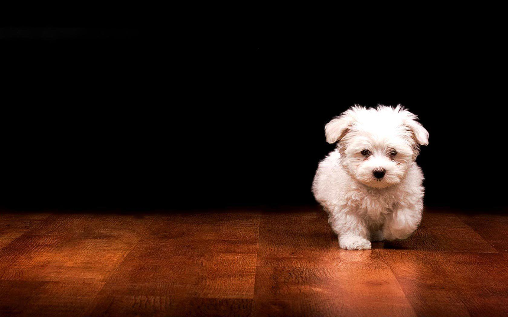 Wallpapers For > Cute Black Puppies Wallpaper