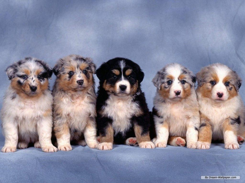 Funny Animals Zone: Puppies Wallpapers 2012