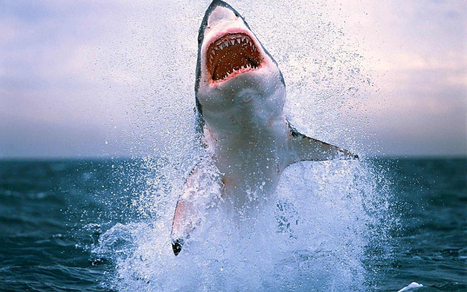 Shark HD Wallpapers | Shark Fish Pictures | Cool Wallpapers