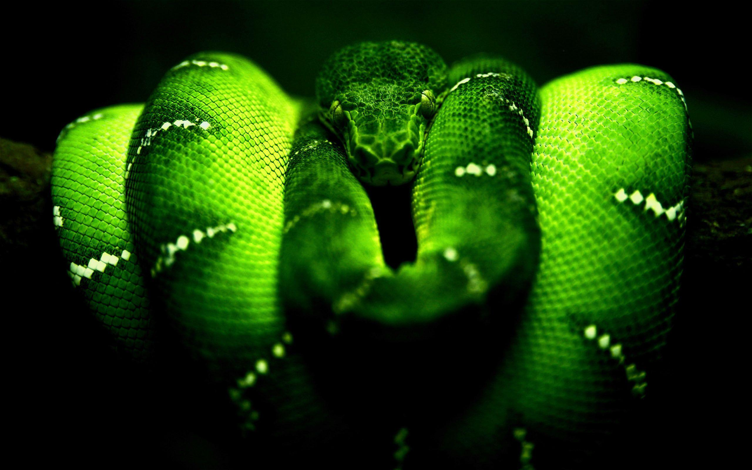 Snake Desktop Wallpapers