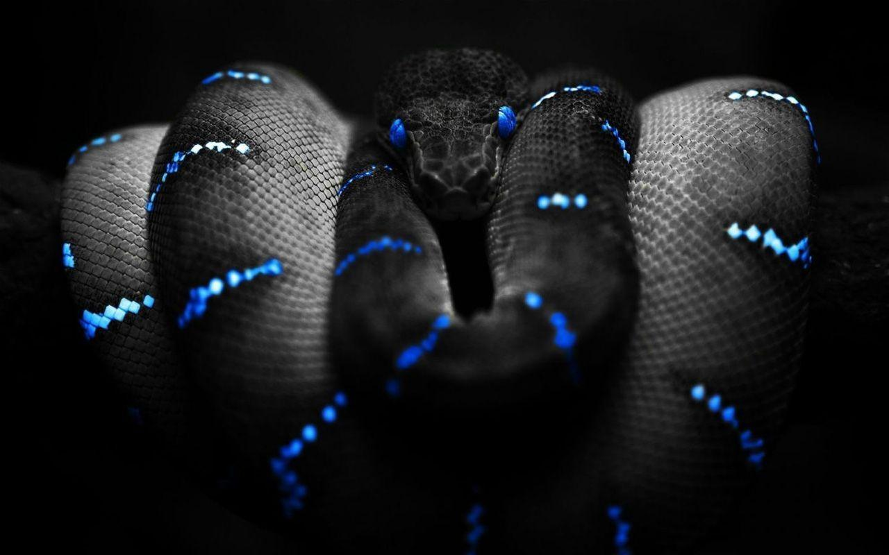 Snake HD Wallpapers- HD Wallpapers Inn