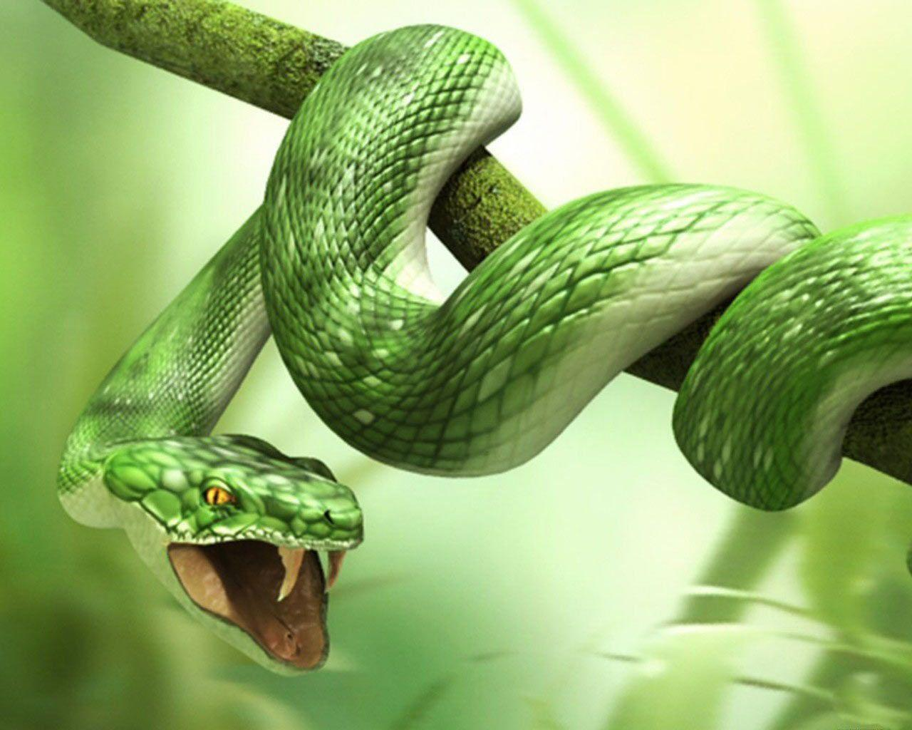Green 3d Snake HD Wallpapers