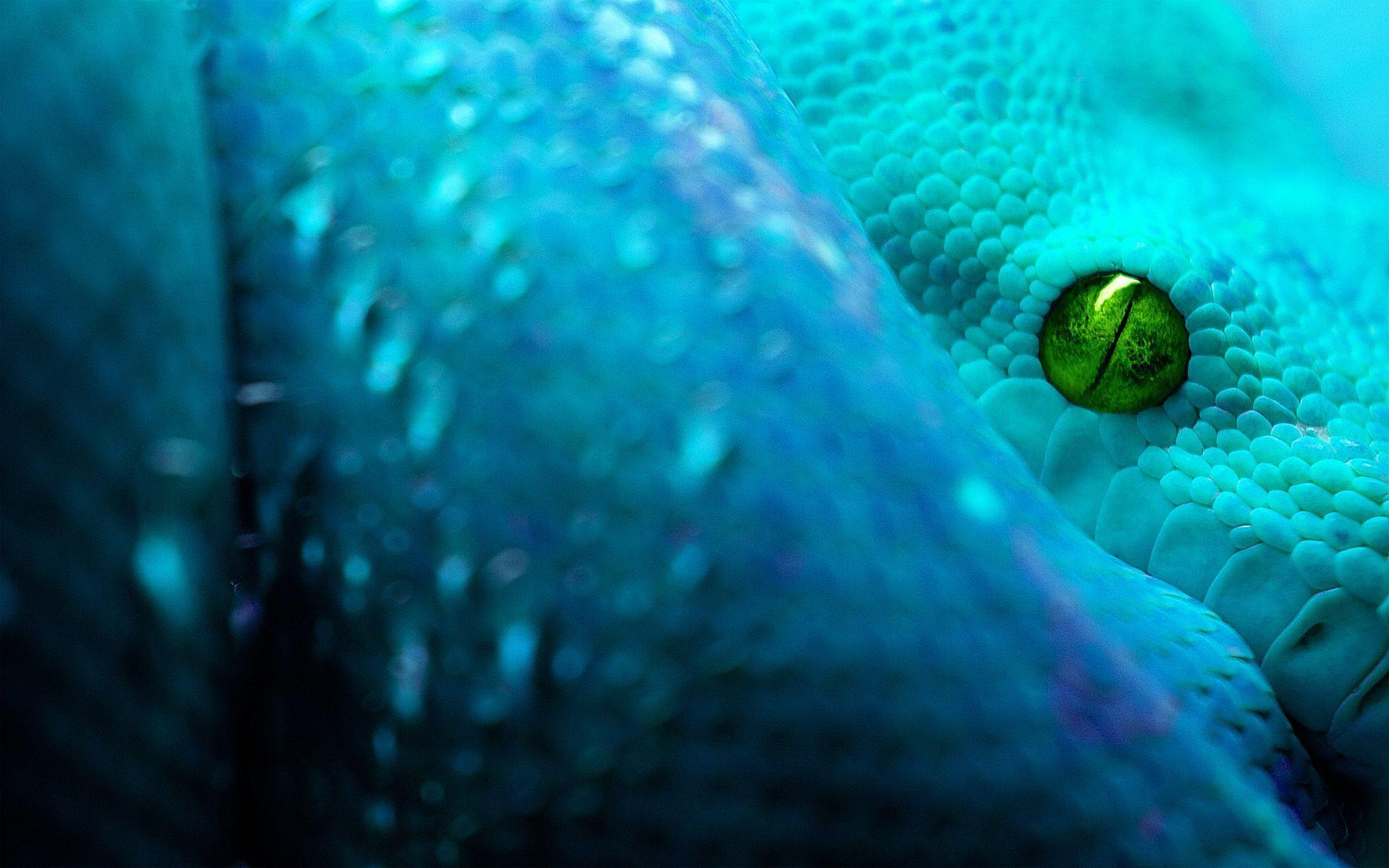 Snake HD Wallpapers Free Download