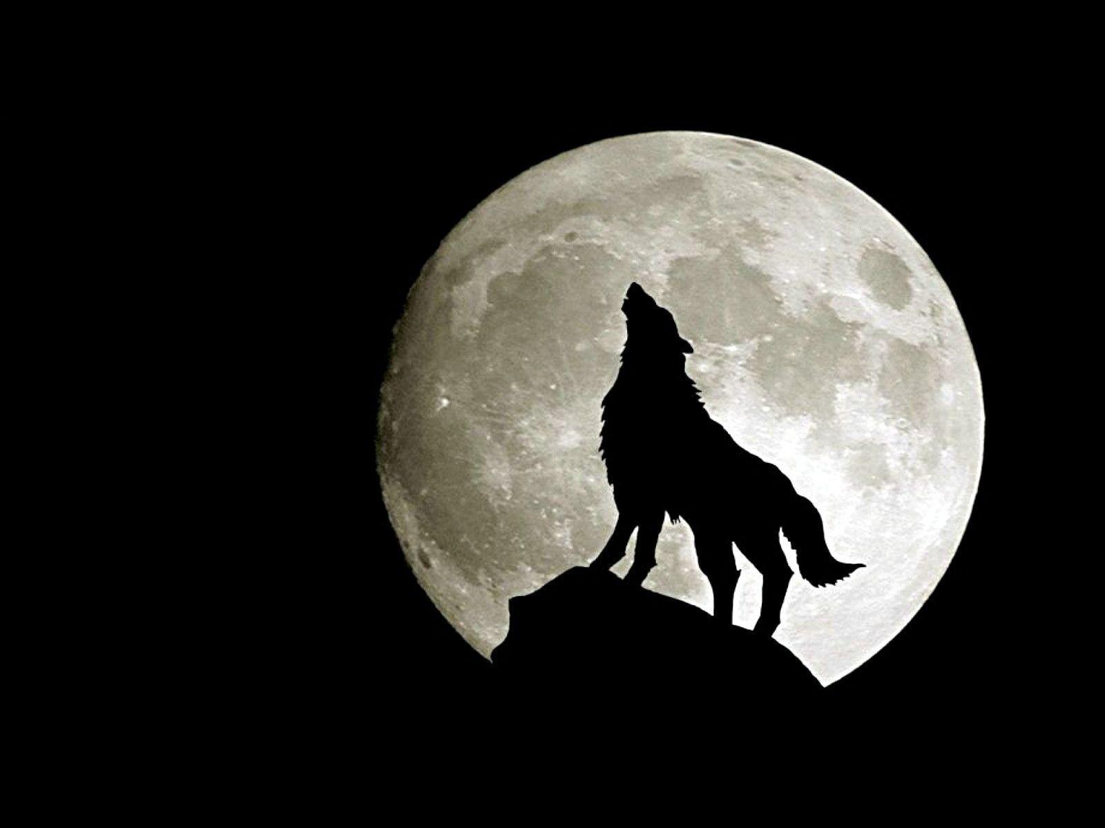 745 Wolf Wallpapers | Wolf Backgrounds