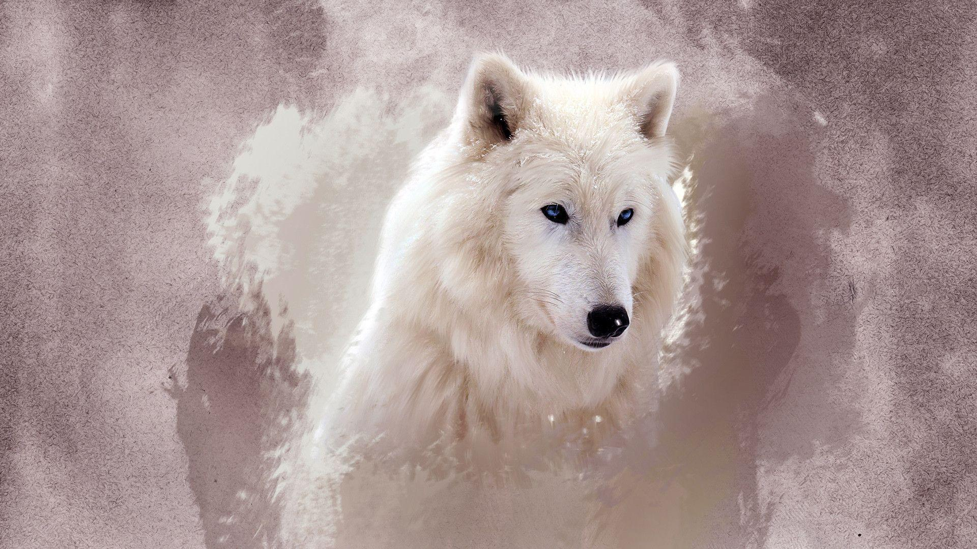 The Wolf Wallpapers   HD Wallpapers