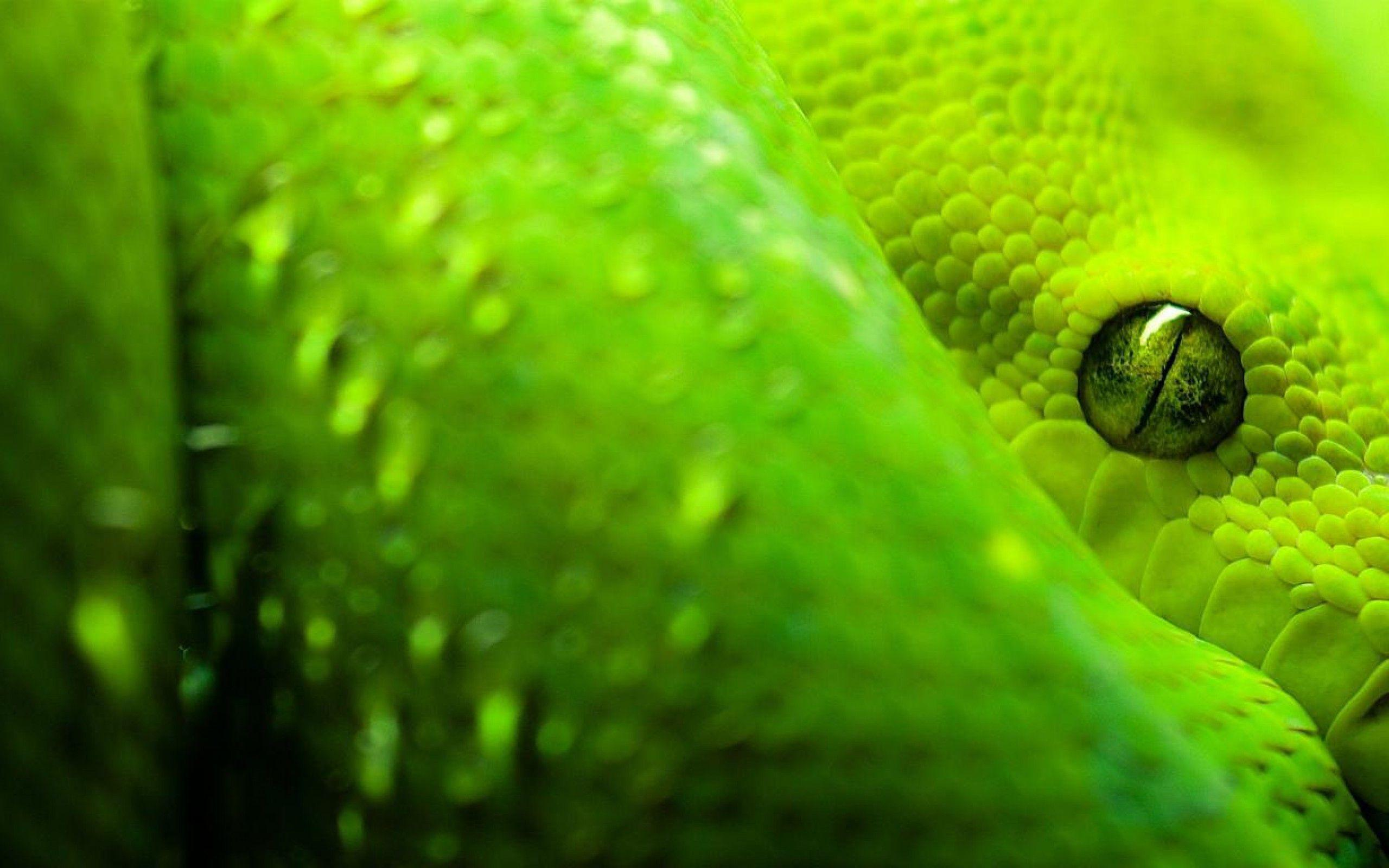 snake wallpaper | snake wallpaper - Part 6