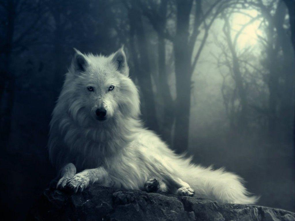 New White Wolf Wallpapers HD