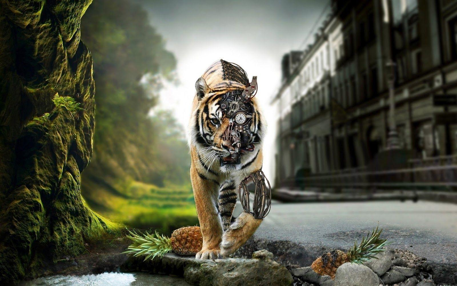Wallpapers For > Tiger Wallpaper Hd For Desktop