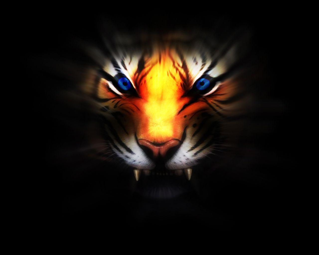 235 Tiger Wallpapers