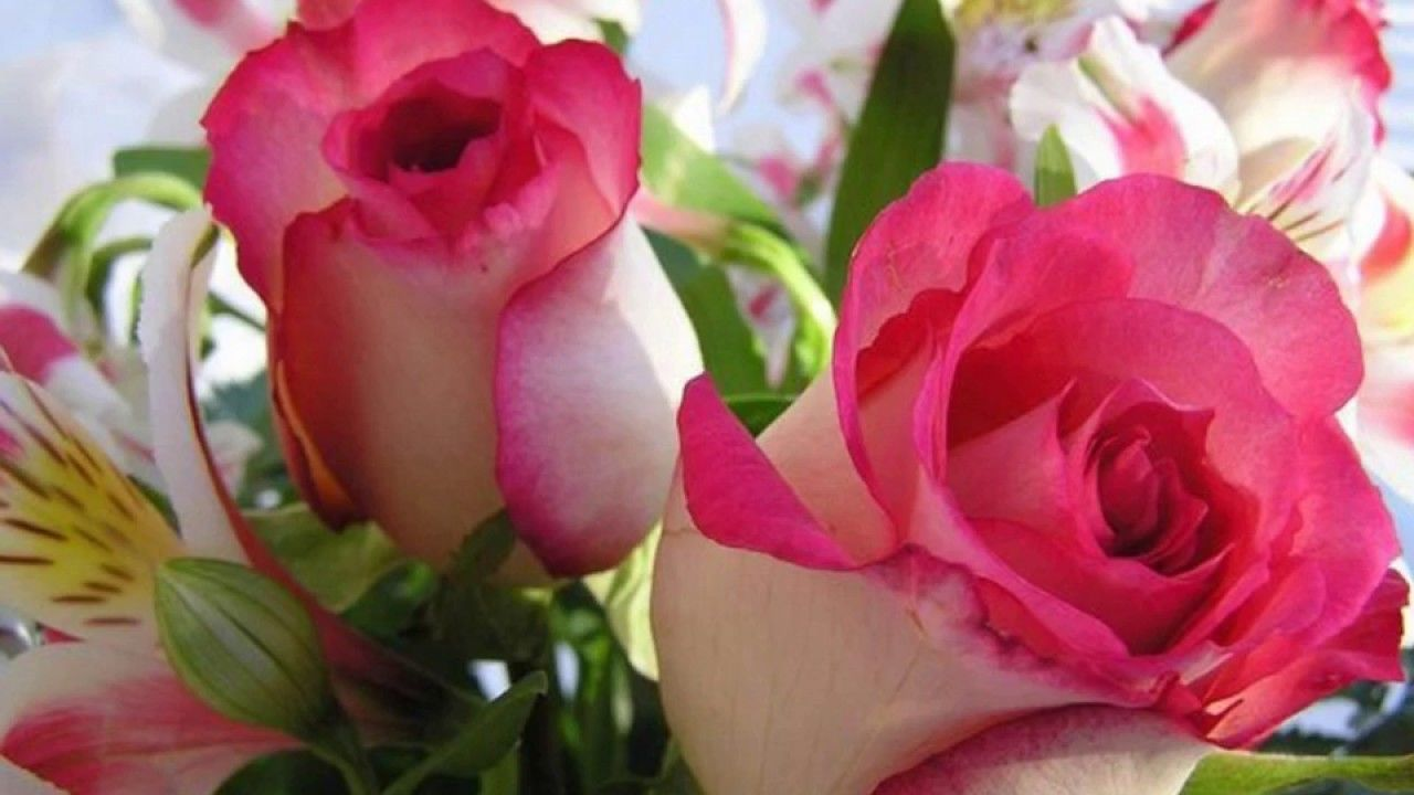 Flowers Images, Pictures, Wallpaper, Hd, Download, Photos, Videos ...