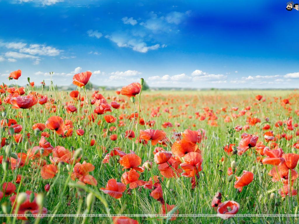 Full HD Wide Nature Wallpapers & Images I Beautiful Nature Photos ...