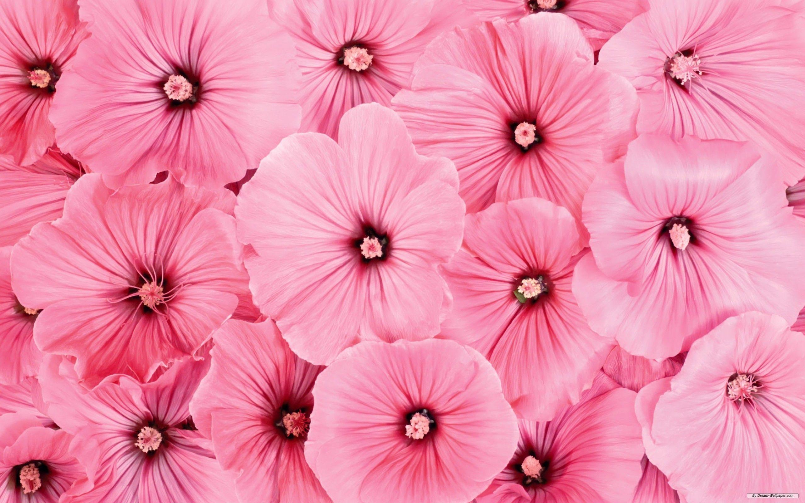 Pink Flowers Wallpapers HD Pictures – One HD Wallpaper Pictures ...