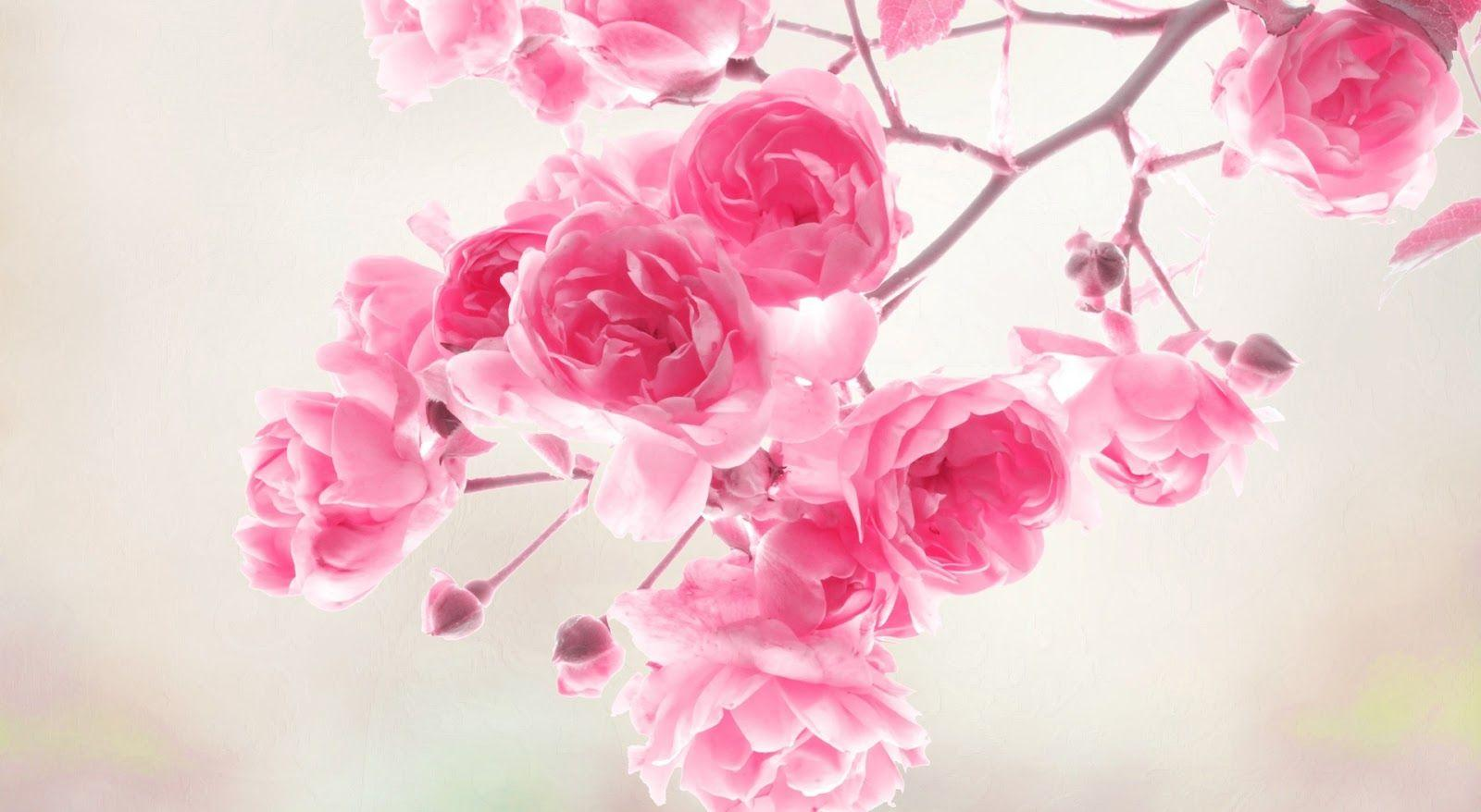 Pink Flowers Wallpaper, Full HDQ Pink Flowers Pictures and ...